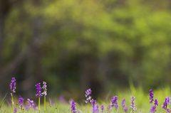 Photographier la flore des pelouses
