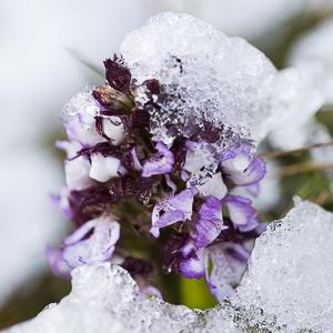 Rudes conditions pour les orchidées