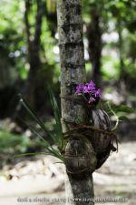 Orchidée sur tronc